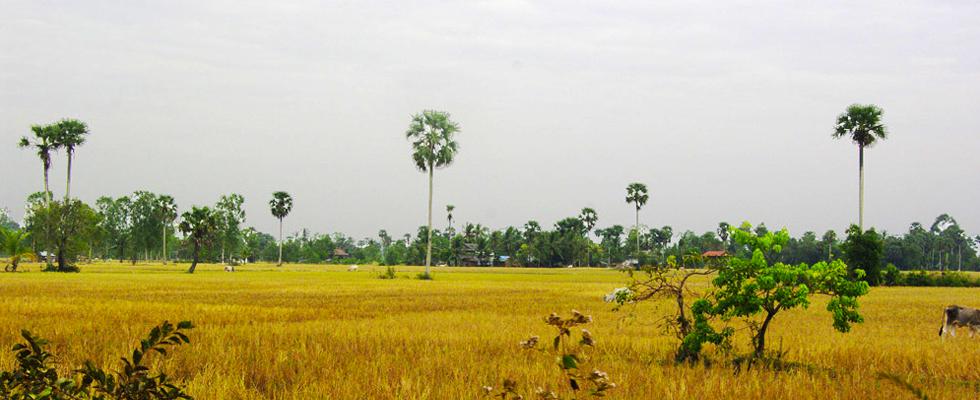 001---Cambodge---Campagne